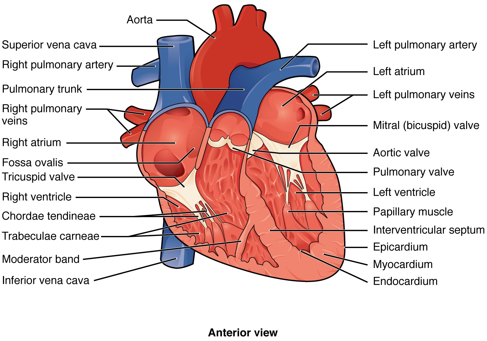 Aortic Valve 2: Quantification Of AS image
