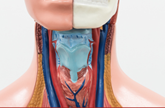 Vascular Access For Radial, Brachial, Internal Jugular, And Other Sites image