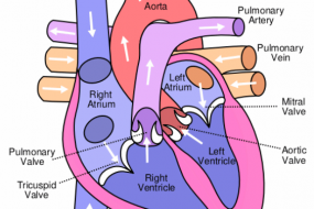 Left Ventricular Function & Geometry 2: LV Geometry image