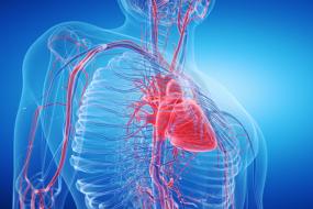 Coronary Artery Anomalies of Intrinsic Arterial Anatomy image