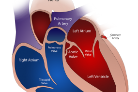 Left Ventricular Function & Geometry 3: Future Approaches image
